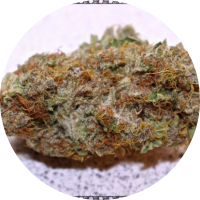 Pink Berry dried marijuana